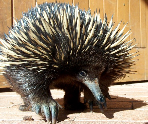 Pretty adorable for a spiky critter.