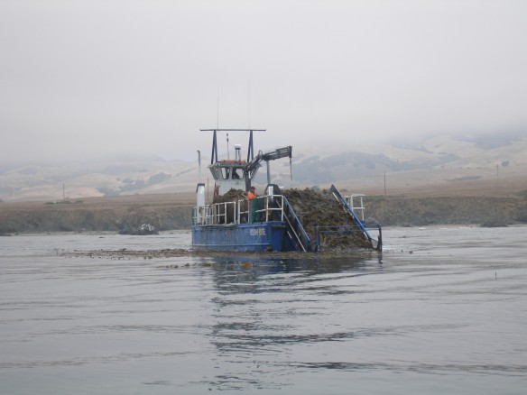 Kelp Harvester in San Simeon, California.