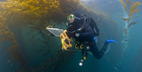 Research diver performing a fish transect.