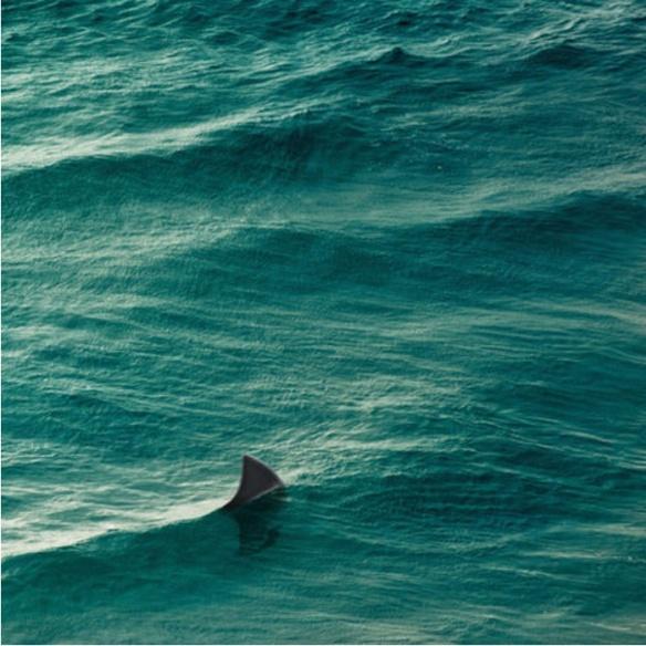sharkfin-1